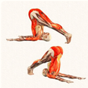 Posizione yoga halāsana हलासन