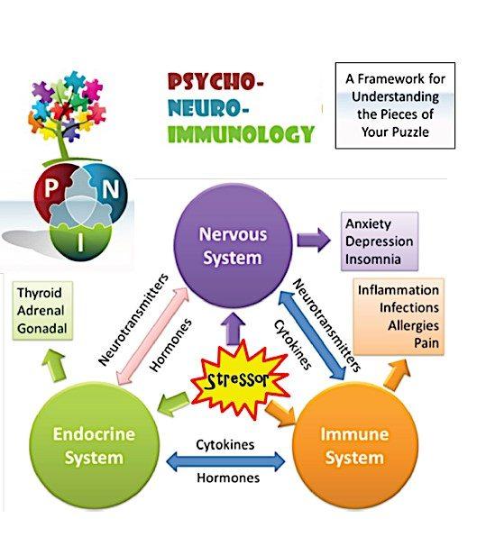 schema sistemi nervoso, endocrino ed immune