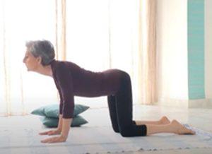Posizione yoga bidalasana