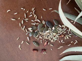 foto introduttiva meditazione con seme