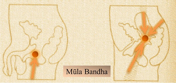 Immagine del Mūla bandha