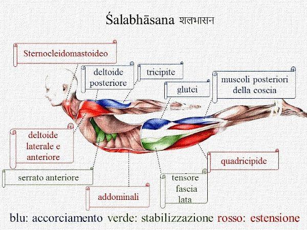 Posizione yoga śalabhāsana