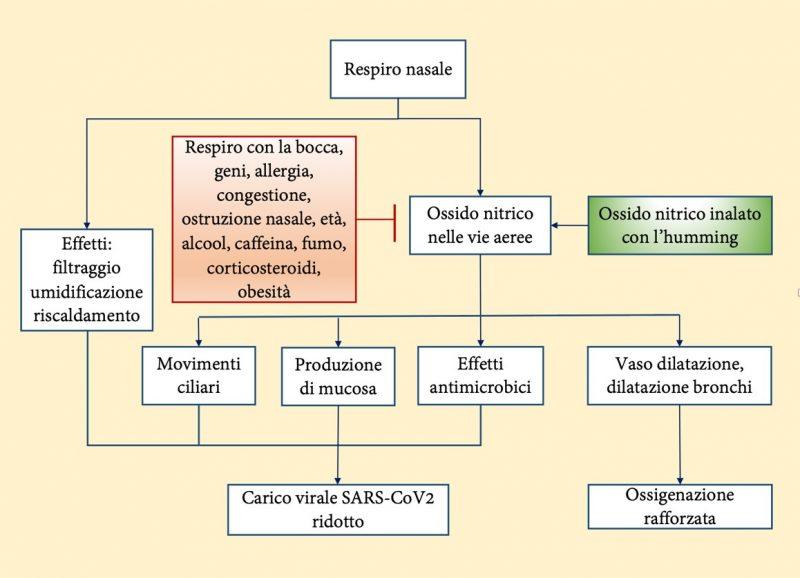 schema respiro nasale e ossido nitrico